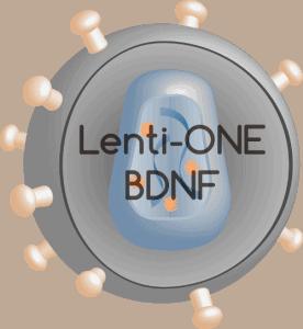 Lenti-ONE BDNF