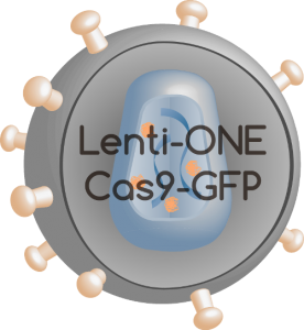 Lenti-ONE Cas9-GFP