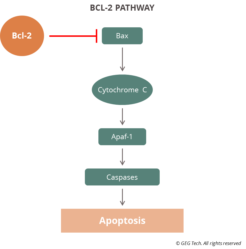 bcl2-pathway