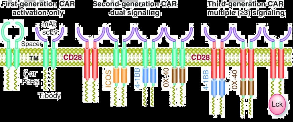 CAR T-cells -