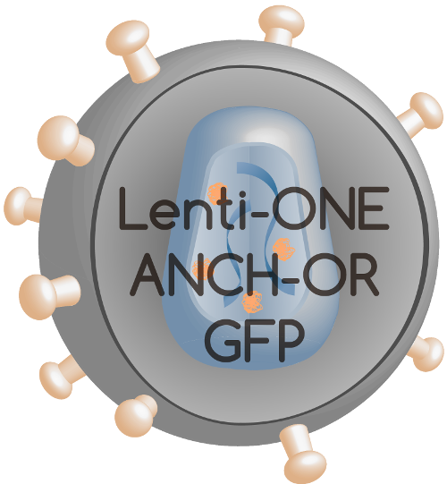 Lenti-ONE ANCHOR-GFP