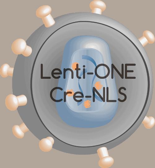 Lenti-ONE Cre-NLS