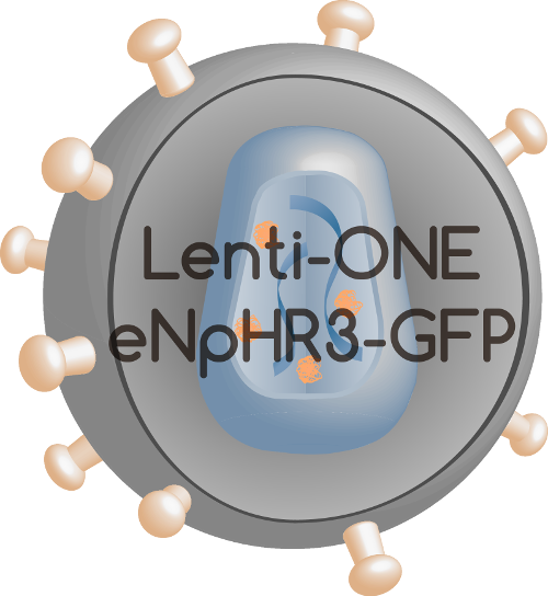 Lenti-ONE eNpHR3-GFP