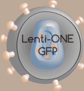 Lenti-ONE GFP