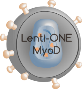 Lenti-ONE MyoD