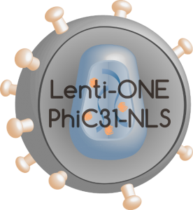 Lenti-ONE PhiC31-NLS