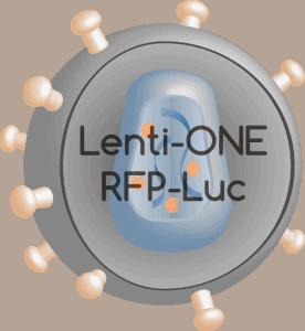 Lenti-ONE RFP-Luc