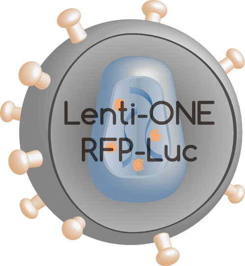 Lenti-ONE RFP-Luc