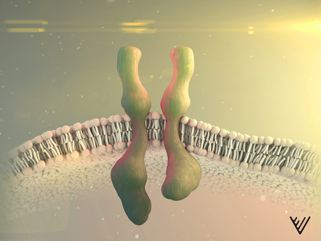 T-knife - unleashing T-cell receptors on cancer - Nature - Blog, Cancer immunotherapy